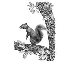 Mr Squirrel Photographic Print