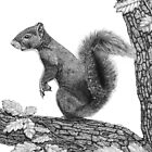 Mr Squirrel by Paul Stratton
