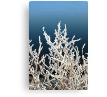 icy twigs and branches in snow against blue Canvas Print