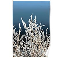 icy twigs and branches in snow against blue Poster