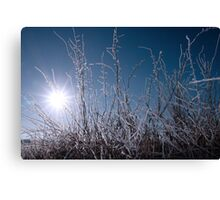 icy twigs and branches in snow against seasonal blue dawn Canvas Print