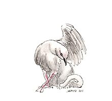 Sketch -- Mythological House Griffin, Dove Variety Photographic Print