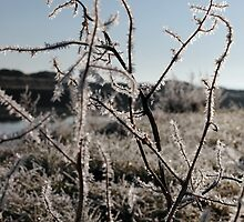icy twigs and grass in snow against blue river and sky by morrbyte