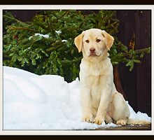 Is it Spring yet? by DennisThornton