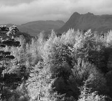 Harrison & Pike o' Stickle from Tarn Hows - Ansell Adams Tribute by Mark Haynes Photography