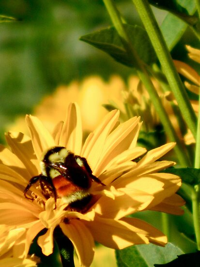 Humble Bumble by amicejane