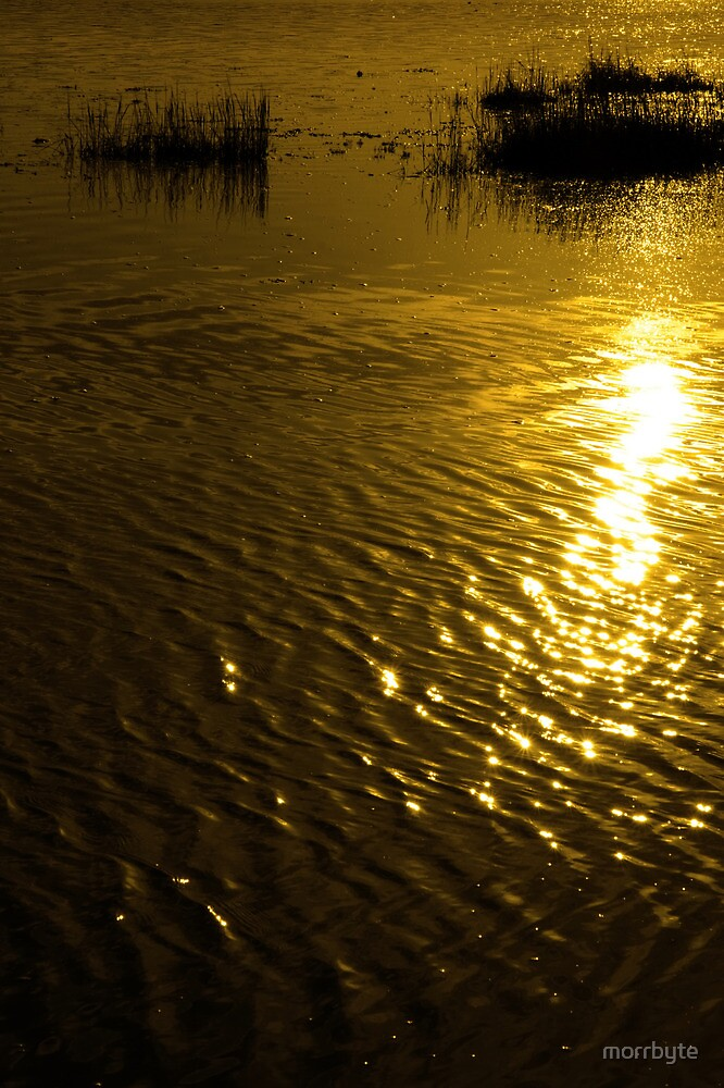 rippled calm water surface with rushes at sunset by morrbyte