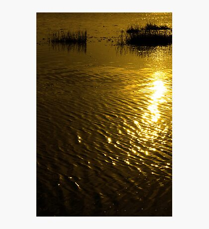 rippled calm water surface with rushes at sunset Photographic Print