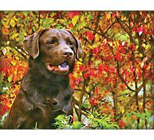 Duke Photographic Print