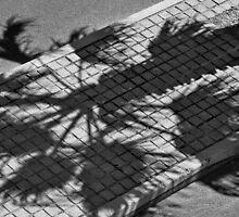 Palm tree shadow by awefaul