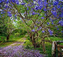 Jacaranda Lane by Renee Hubbard Fine Art Photography