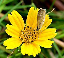 Enjoying nectar by pinakibaidya