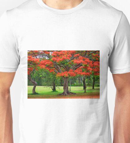 Fiery Poinciana Trees Unisex T-Shirt