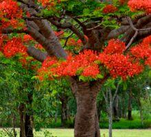 Fiery Poinciana Trees Sticker