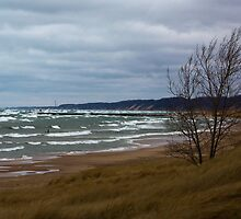 Saugatuck, MI by Carrie Bonham