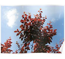 The Upward Reach - Copper Coloured Leaves Poster