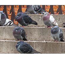 Pigeon stoop Photographic Print