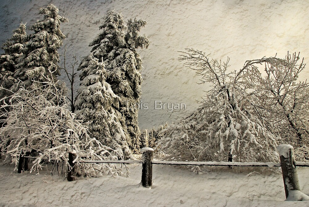 Heavy Laden Blizzard by Lois  Bryan