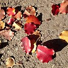 Autumn Leaves on the New York Sidewalk by SylviaS