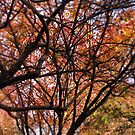 Tree in Fall by SylviaS