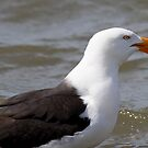 Proud Gull by Will Hore-Lacy