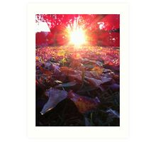 Sunflare and Leaves Art Print
