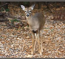 Hello Deer by Mikell Herrick