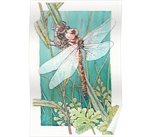 Dragonfly metamorphosis Poster