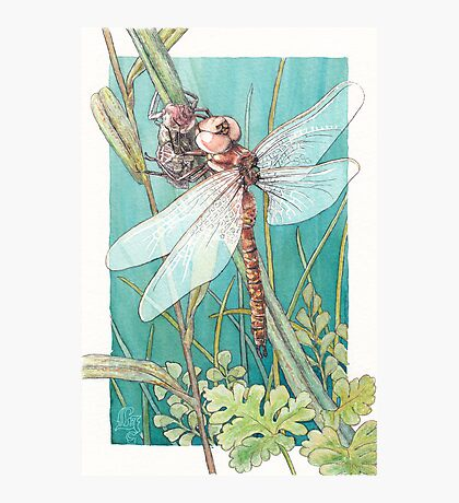 Dragonfly metamorphosis Photographic Print