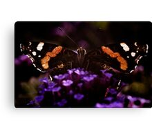 Butterfly on verbena flower. Canvas Print