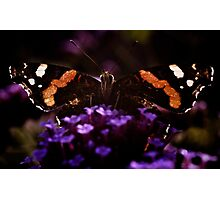 Butterfly on verbena flower. Photographic Print