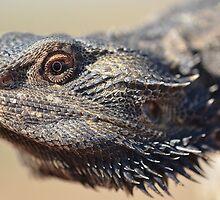 Lizard head by Mel  LEE