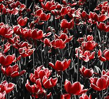 Red Tulips by Michael  Kemp