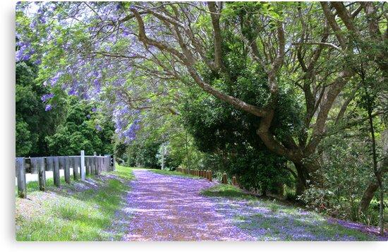 jacaranda walk ..mt.tamborine  by gail woodbury