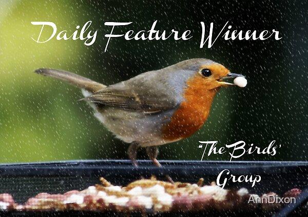 Banner - The Birds Group by AnnDixon