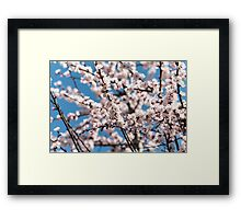 Cherry blossoms Japan  Framed Print
