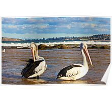 Pelicans at the entrance to Narrabeen Lake Poster