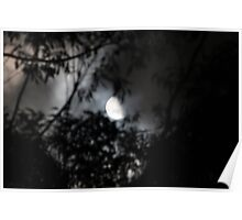 Half Moon Through Trees Poster