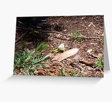 Cabbage Moth - 23 11 12 Greeting Card