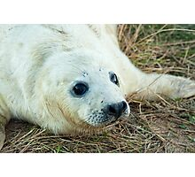 Seal Pup, Donna Nook Photographic Print