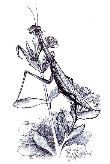praying mantis hand illustrated schoolbook print by Veera Pfaffli
