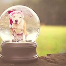 Merry Snowglobe by Zdogs