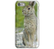 Snowshoe Hare in Alaska iPhone Case/Skin