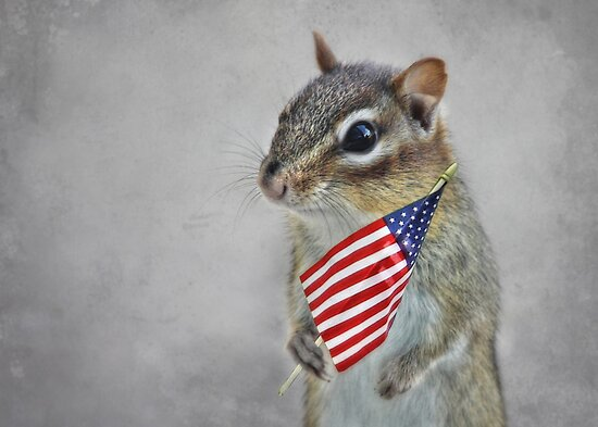 Patriotic Chippy by Lori Deiter
