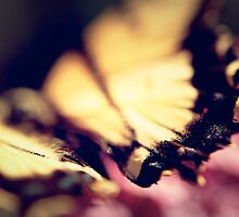 why o why must a butterfly fly by nashiwashi