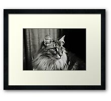 Maine Coon Mono Framed Print