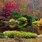 Japanese Garden November 2012 by Phillip S. Vullo Jr.