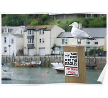 A seagull stands defiantly on a Do Not Feed the Seagulls notice, Looe, Cornwall, UK Poster