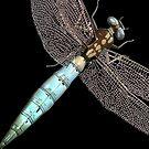 Dragonfly on Black by pjwuebker