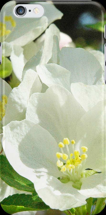 Apple Blossoms by pjwuebker
